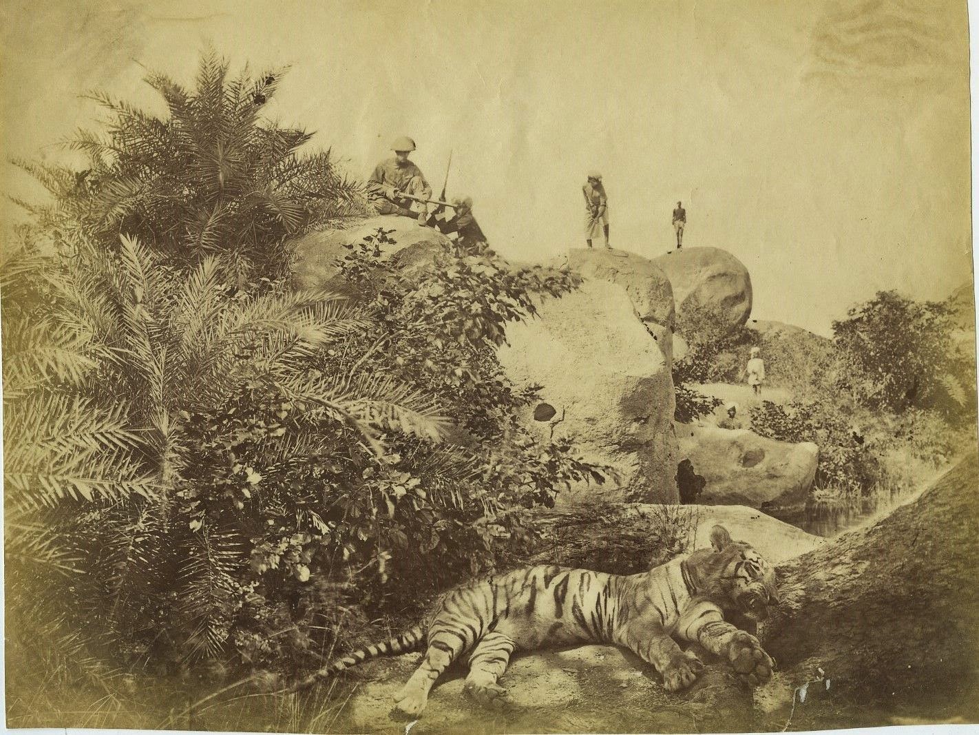 Dead Tiger and Hunters - India c1880's