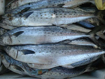 Falta de peixe obriga pescadores a mudarem-se para Sofala