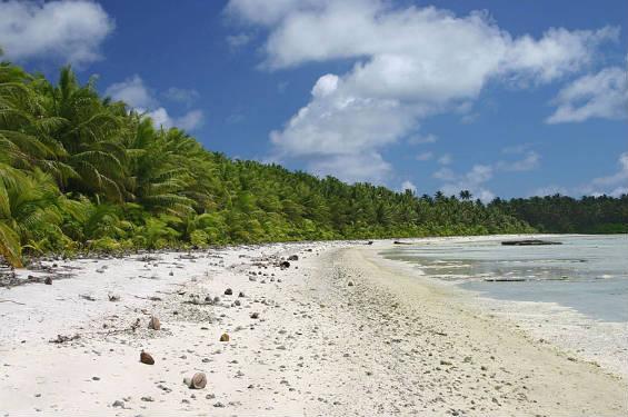 Isole deserte 565PalmyraNorthBeach