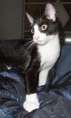 Crush e Tininha - gatinhos para adoção em Santos PB290001