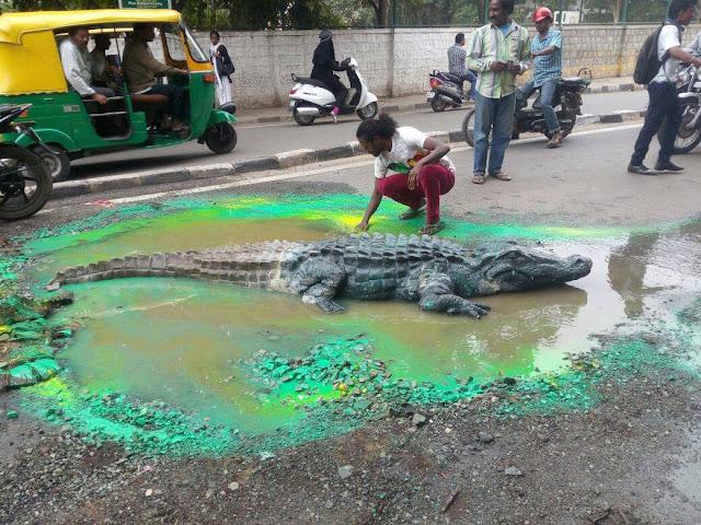 bangalore crocodile