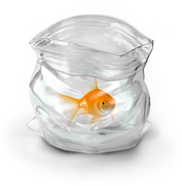 Unzipped hand blown glass bowl spicytec for Fish bowl glass