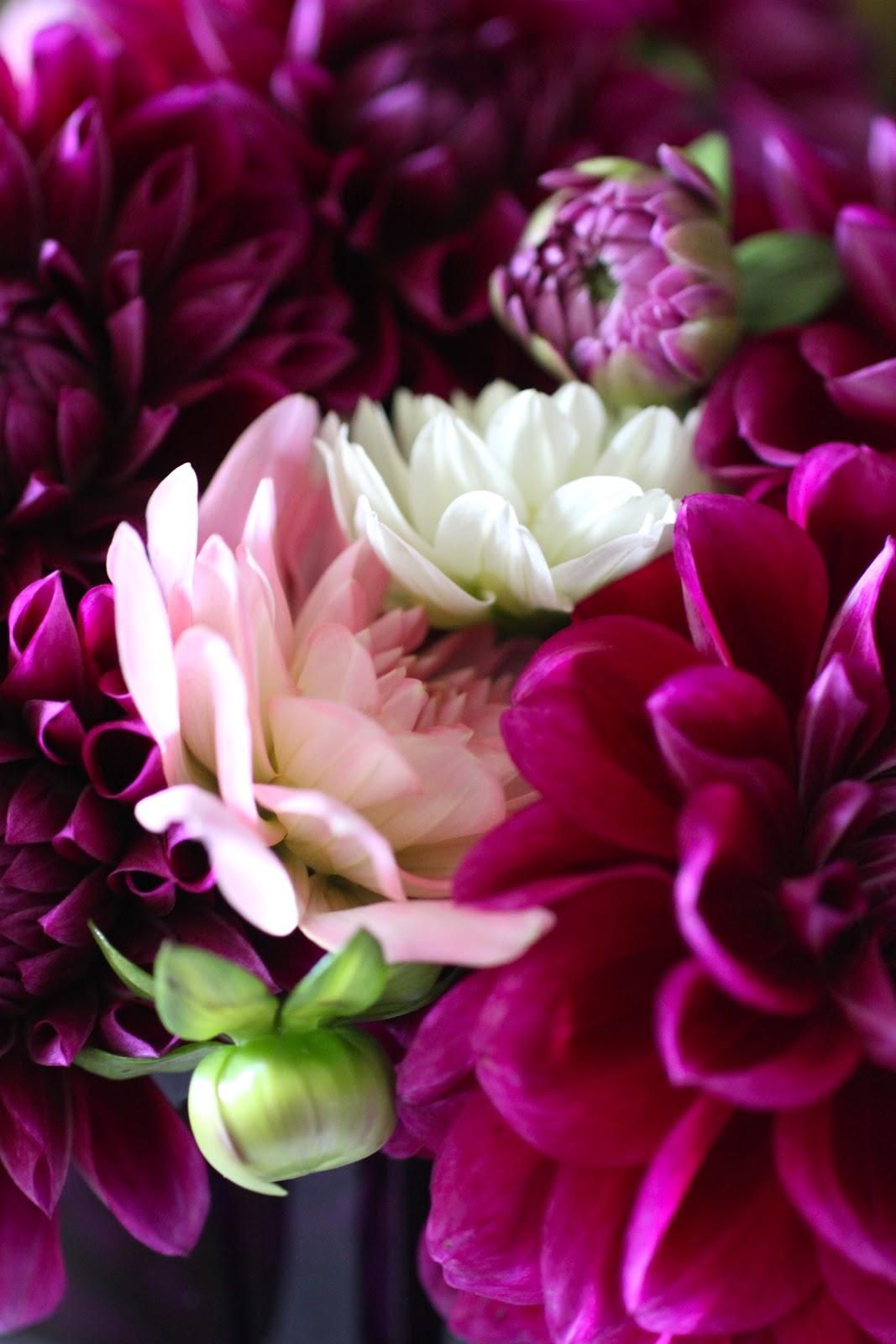 Reggie Darling: Autumn Flowers