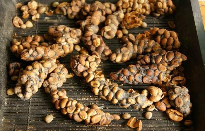 أغرب الأكلات في العالم - قهوة كوبى