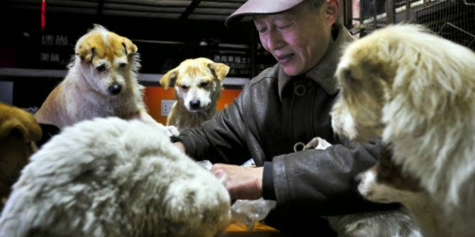 Hu, Pengadopsi Kucing dan anjing terlantar di china. NetEase