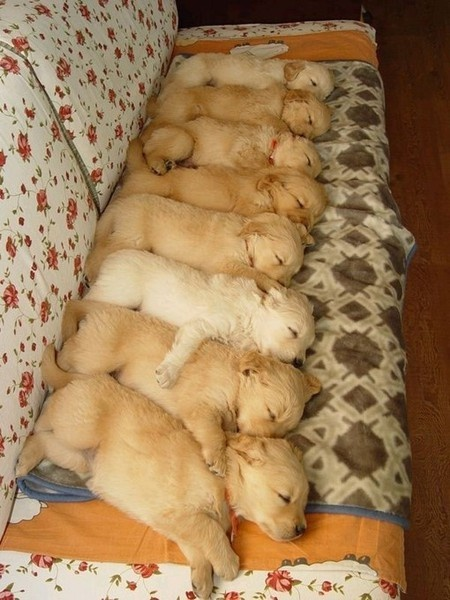 Puppies sleeping together
