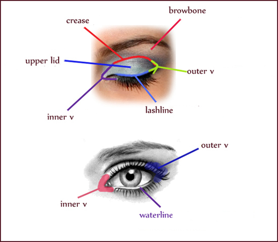 How to apply eyeshadow diagram 2018 images pictures how to use the gallery for eyeshadow drawing how to apply eyeshadow diagram ccuart Gallery