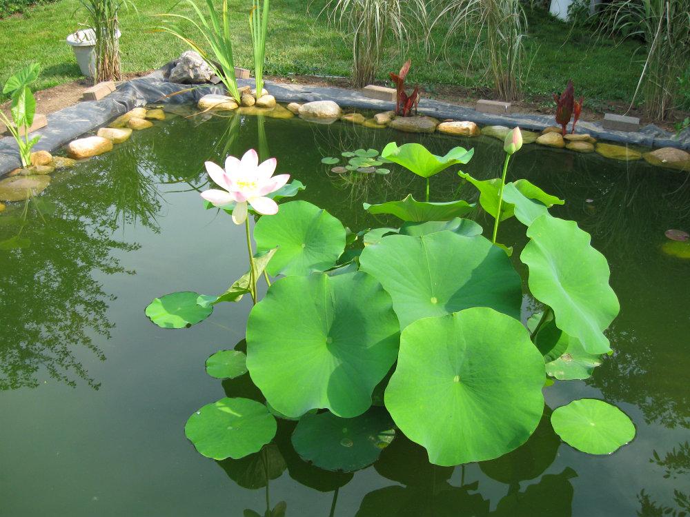 Feltsewgood july 2013 for Starting a koi pond