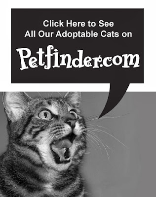Click Image to See our Adorable Adoptables!