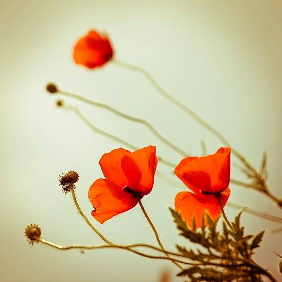 https://www.etsy.com/listing/100022917/summer-photography-poppies-photo-print?ref=favs_view_1