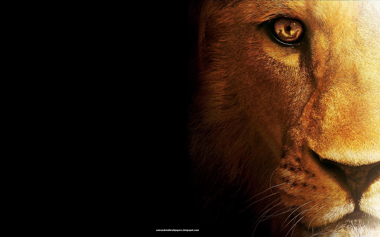 new and nice hd wallpapers: lion in amazing style wallpapers hd for