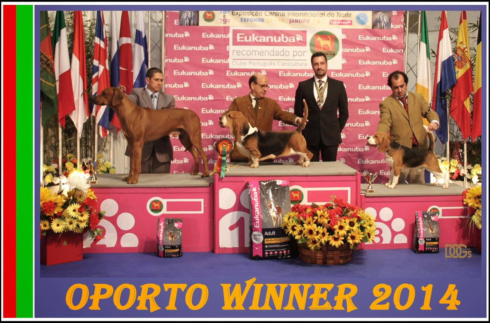 Rhodesian Ridgeback Porto Winner 2014