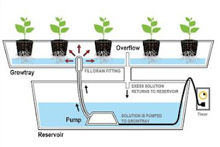 Hydroponic System EBB and Flow system