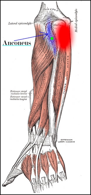 TRAIN OUT PAIN: Small Overlooked Muscles: Anconeus for Elbow Pain