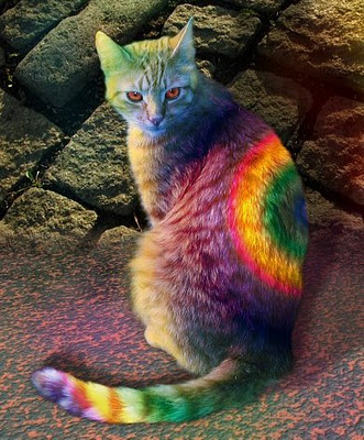 Colored Cat 2012
