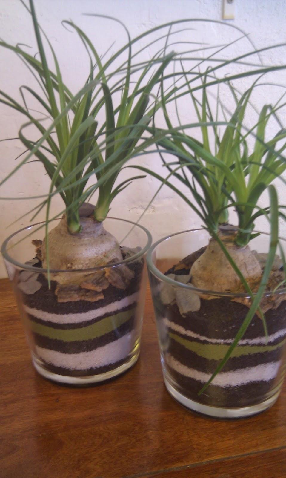 plante styling i glaspotter.