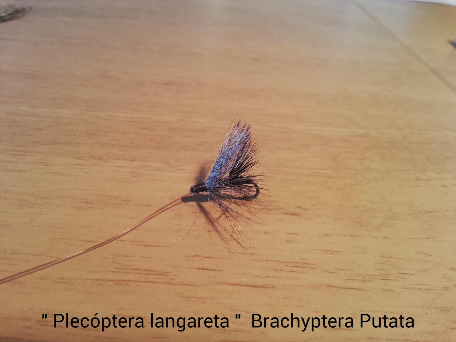 PLECÓPTERA LANGARETA