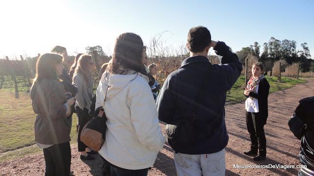 Visita guiada na Bodega Bouza - Montevidéu, Uruguai