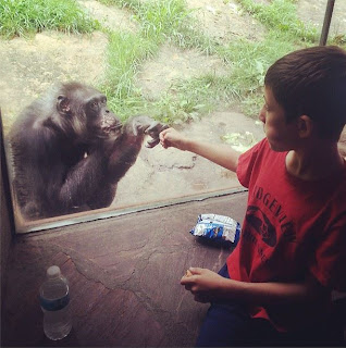 chimp+fist+bump.JPG