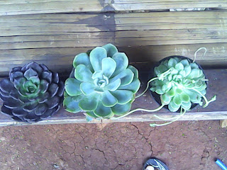 jual tanaman dekorasi