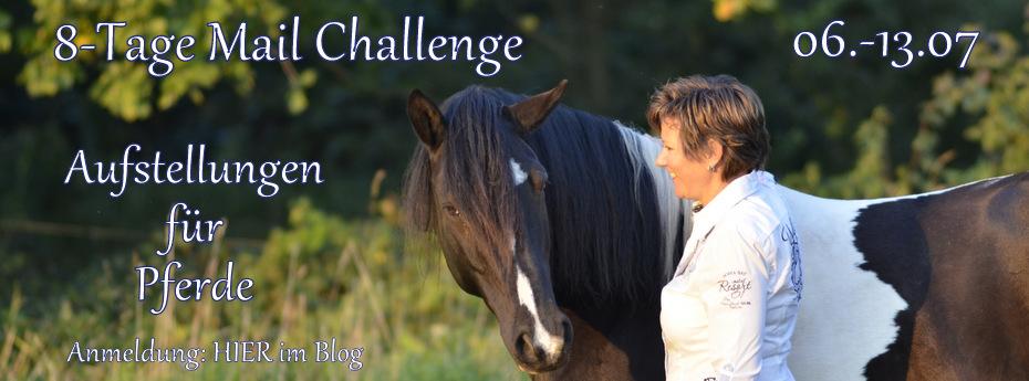 Der Blog für PferdeMenschen