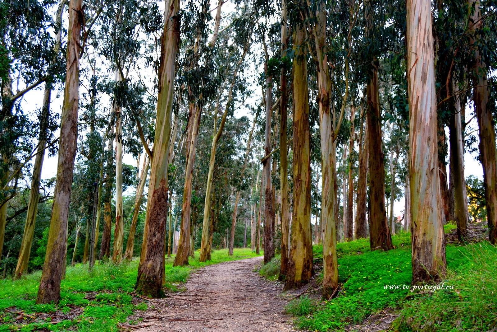 парки Португалии, природа Португалии