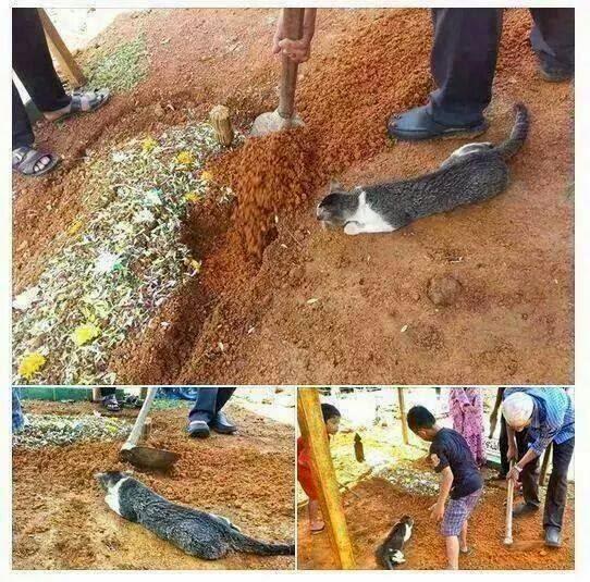 Kisah Kucing Enggan Tinggalkan Kubur!