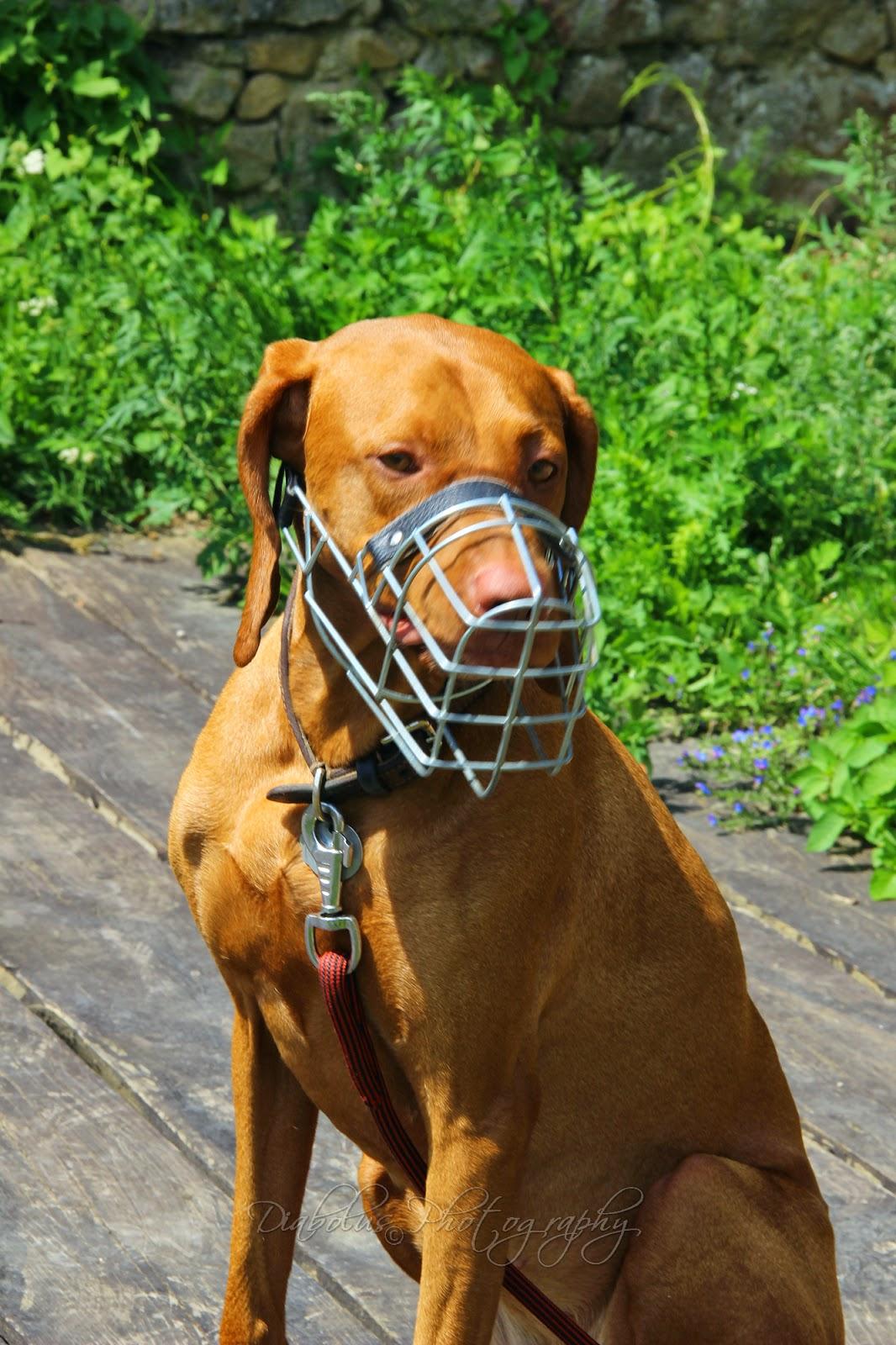 Baily/Baily the Dog