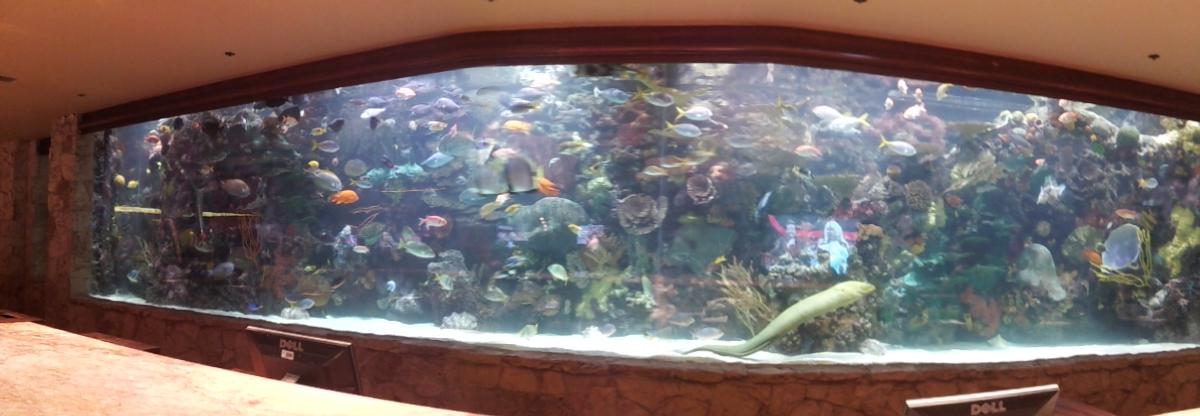 20 000 gallon lobby aquarium at the mirage 2017 fish for Fish tank las vegas