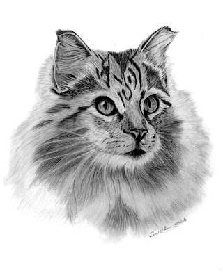 Tabby, Cat, Long haired, Feline, Kitty, Graphite Pencil, Drawing, Art, Fine Art