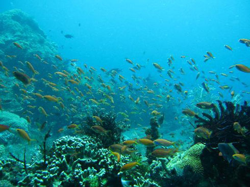 Japanesw wreck, coral garden