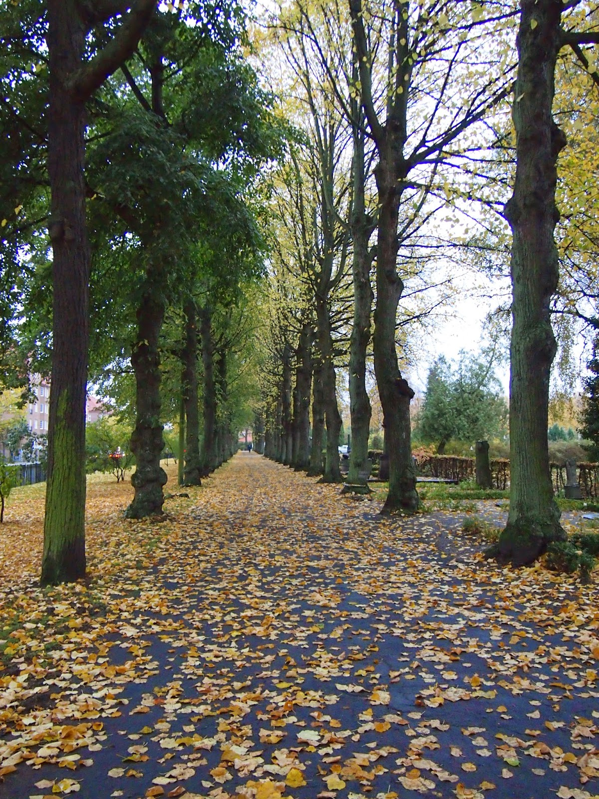 A straight row of trees in St. Paul's Church, Malmo