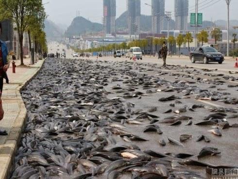 Ikan keli bertaburan di atas jalan raya