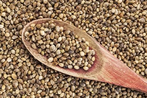 9 فوائد صحية من بذور القنب