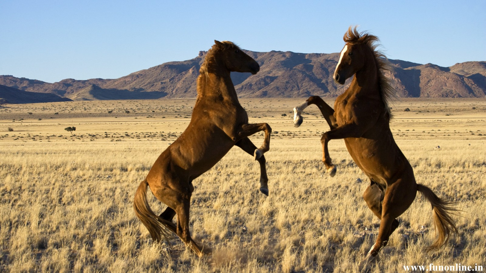 Great   Wallpaper Horse Rose - wild+horses+wallpapers+21  Trends_701330.jpg