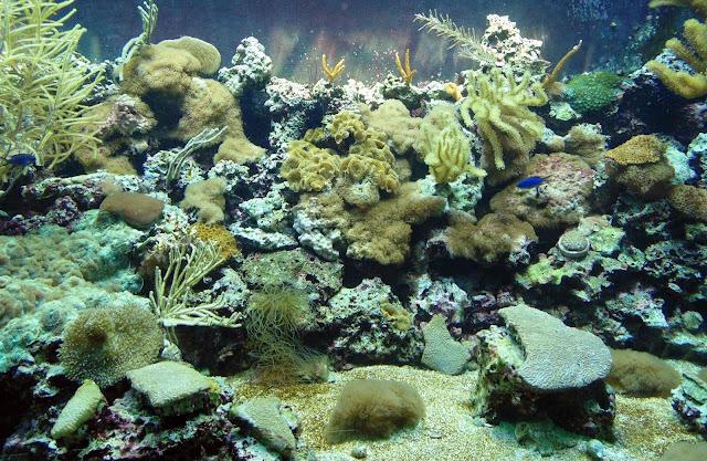 Aquarium Sponges