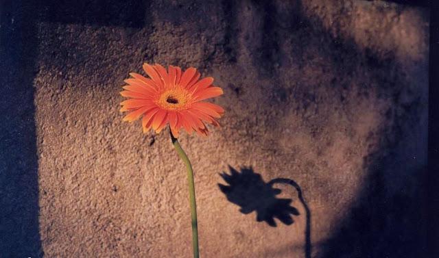 Tristesse d'une fleur