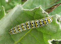 Caterpillar Picture and Photo 19