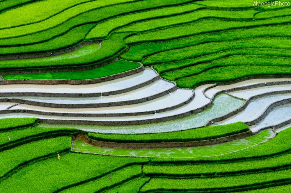 hình nền ruộng lúa đẹp nhất