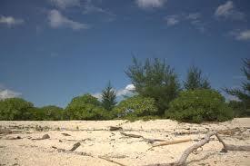 GREEN ISLAND ACTION