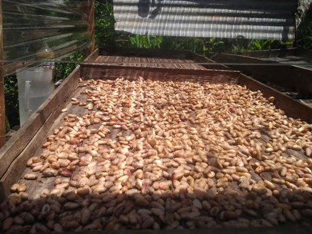 Siriana Cacao