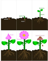 Little Stars Learning: Seeds, Seeds, Seeds! Book Activity #2 Plant ...