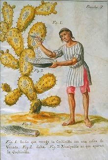 Indian Collecting Cochineal with a Deer Tail by José Antonio de Alzate y Ramírez (1777)