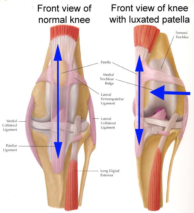 COMMON KNEE INJURIES | Pilates Patio