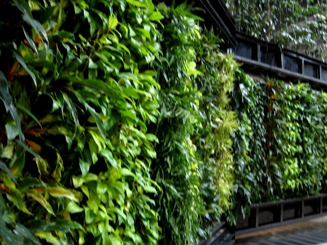 Tropical garden and landscape indoor tropical garden
