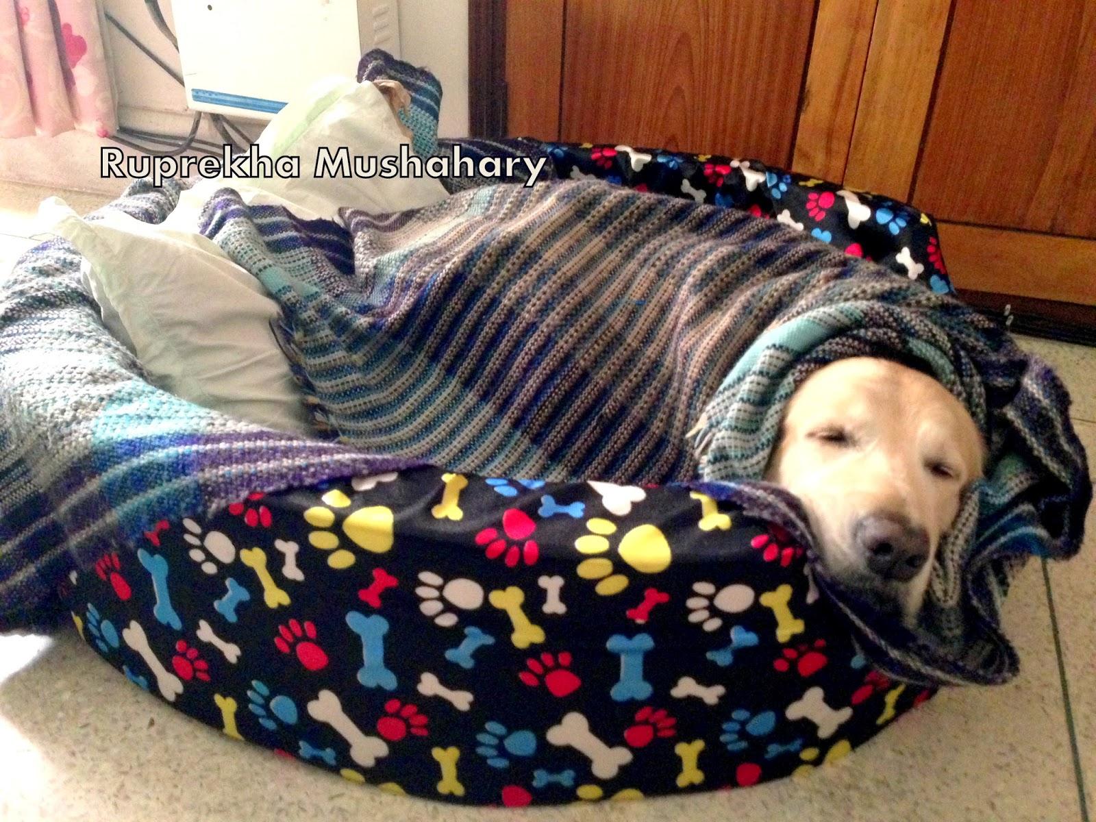 Lazy Pets Soft Dog Kennel