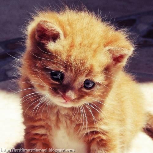Cute red kitten.
