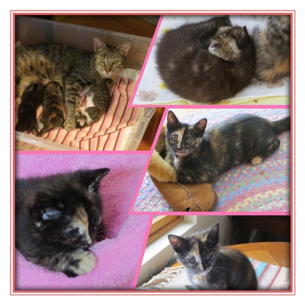 cats roses and books halo s kitty paddington at 4