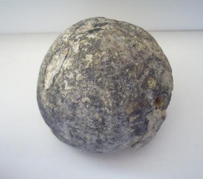 Black Fossil Sea Urchin Echinoid