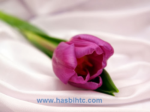 Arti Bunga Tulip